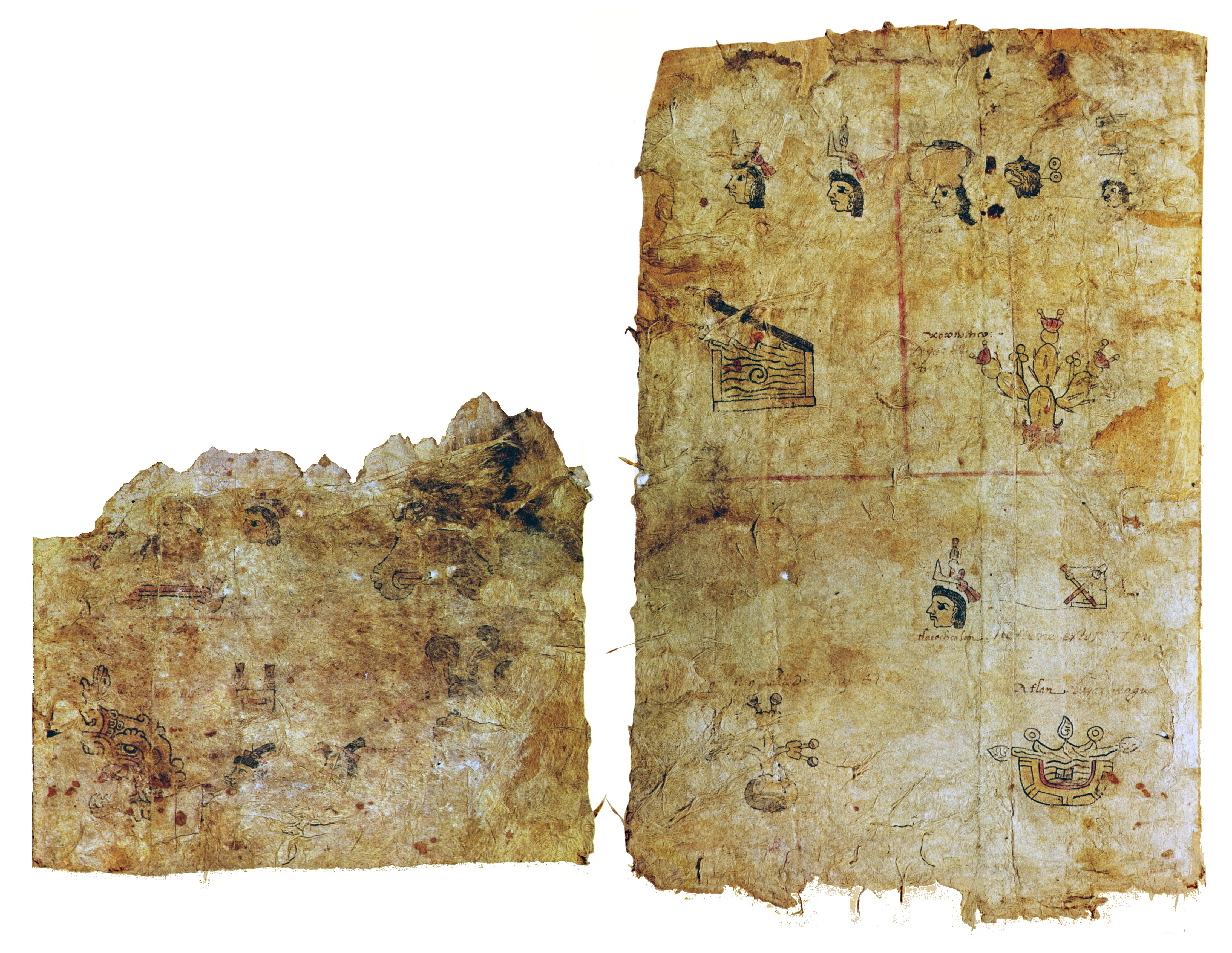 FIGURE 3. Differential damage of folio 1r (left) versus folio 1v (right).